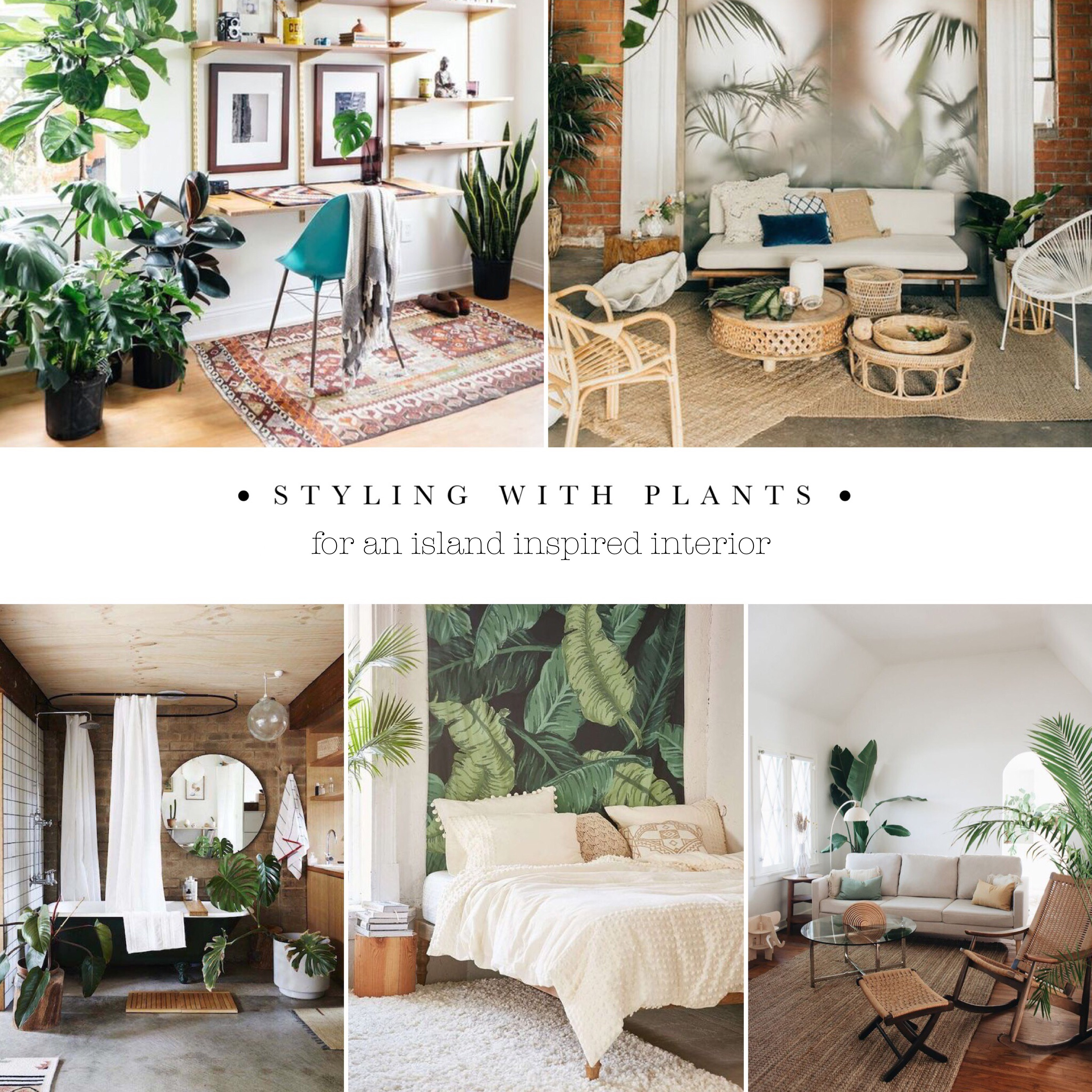 Styling with plants for an island inspired interior