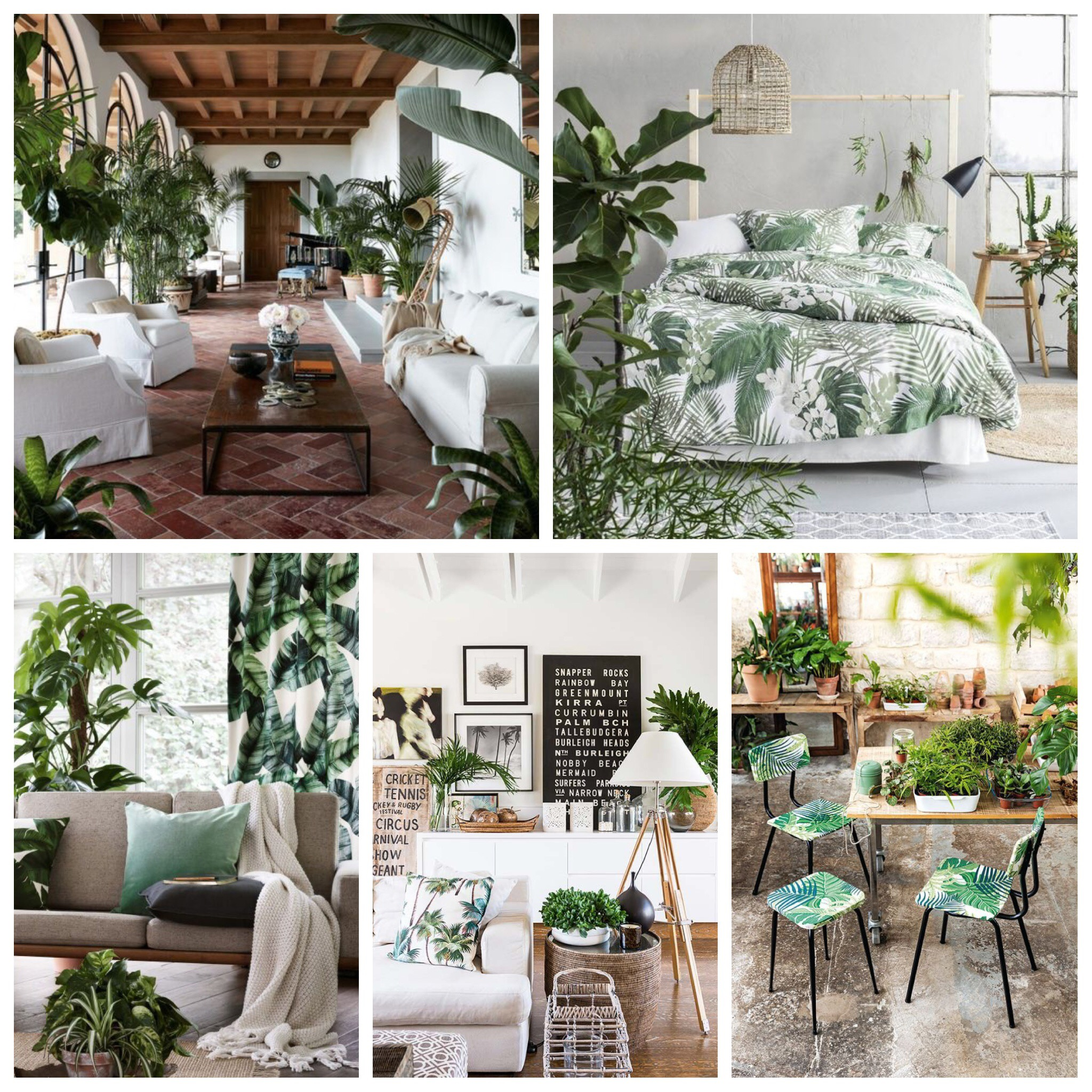 Tropical plants for an island inspired interior