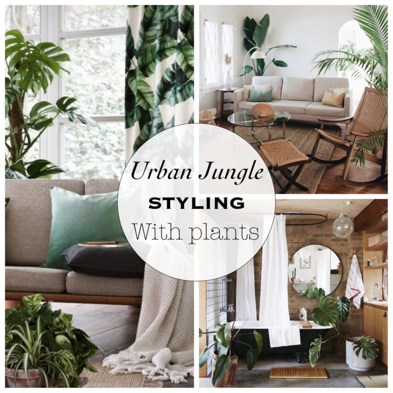 Urban Jungle - Styling with Plants